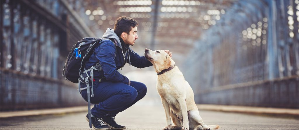 Resa med hund till Spanien