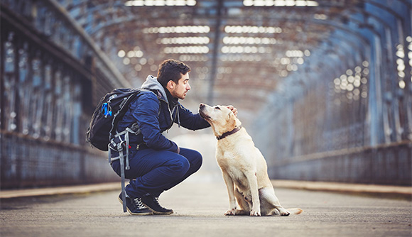Resa med hund eller katt till Spanien
